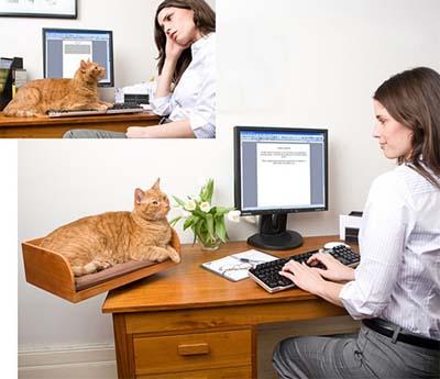 Компьютерный стол и кот.